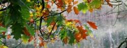 Helemaal herfst