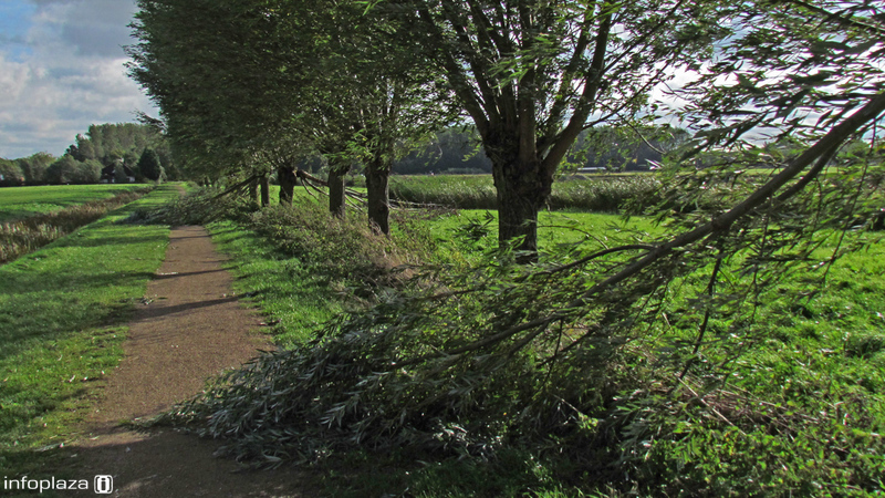 Omgewaaide bomen